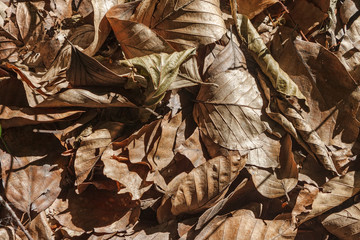 dry leaves lying on the ground