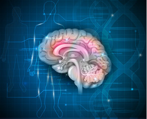 Human Brain research abstract scientific background with DNA chain