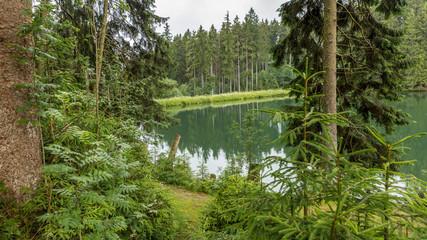 Am Mittleren Grumbacher Teich bei Hahnenenklee im Harz