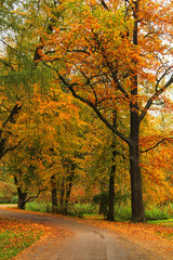 beautiful park at sunrise in autumn time. Nature background