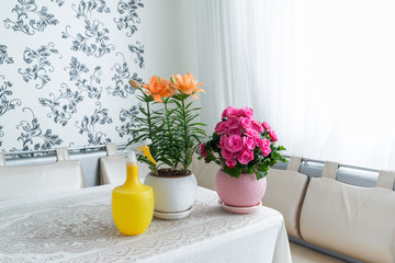 Several potted flowers and sprayer are on table in the room