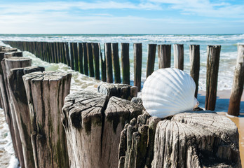 Wall Mural - Seashells at wave breakers