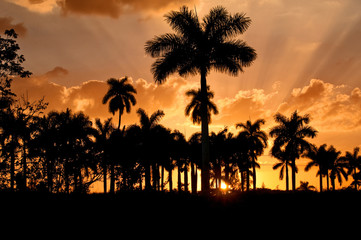 Palm trees at sunset, Cuba