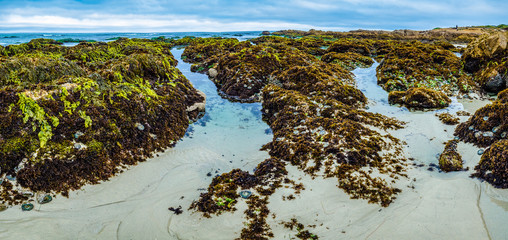 Low tide with exposed rocks and plants