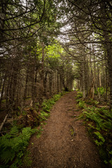 tree covered hiking trail to Western Brook Pond