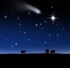 Wall Mural - Schafe am Heiligabend