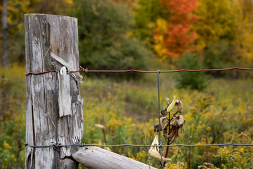 old fence post and wire fence with fall color in background