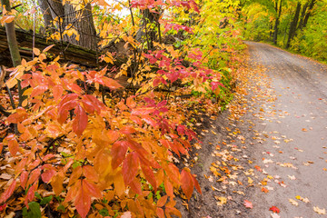 country road with red and orange leaves