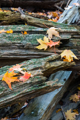 autumn leaves on split rail fence