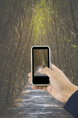 Hand holding the phone taking photo of Wooden walkway in mangrov