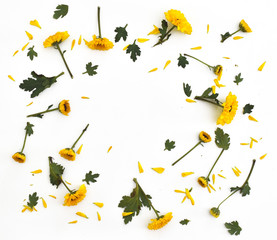 Framework from yellow flowers on white background. Flat lay comp