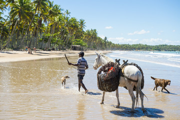 Brazilian man wielding machete knife at dogs as he leads horse carrying heavy baskets traveling along the beach in a typical northeast Brazil scene