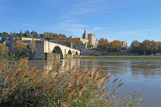 Avignon en automne