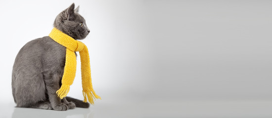 gray kitten in yellow scarf on a white background, smoky cat in