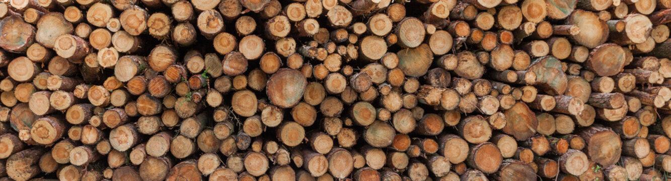 Logging in yorkshire