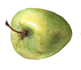 Green apple. Hand drawn watercolor painting on white background.