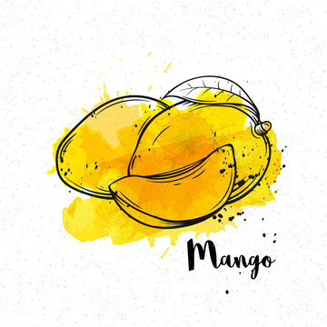 hand drawn mango