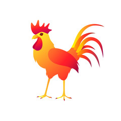 Fire rooster on a white background.