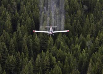 Spruce Budworm Spray Project, British Columbia, Canada.