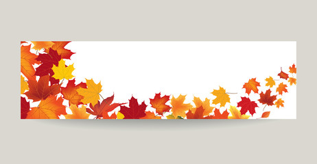 Fall leaf nature banner. Autumn leaves background. Season floral border