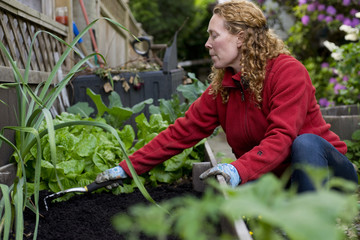 Woman plants vegetables in her home garden. Vancouver, British Columbia, Canada