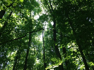 Green Nature Summer Forest Canopy