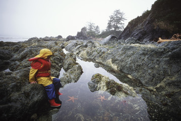 boy looks into tidepool in rain, Vancouver Island, British Columbia, Canada.