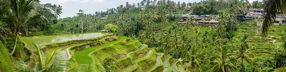 Panorama sur les rizières de Tegalalang, Bali, Indonésie