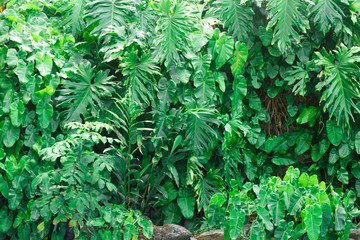 green tropical plants leaves background