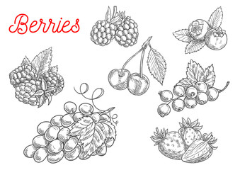 Summer fruit and berry sketch for food design