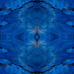 Beautiful pattern abstract background texture made from colorful macaw, macaw feather, Hyacinth Macaw feathers