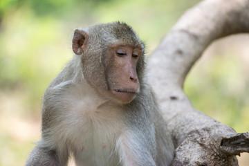 Monkey.Monkey live in nature.Monkey on the tree.