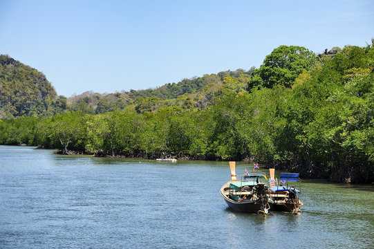 Mangrove forest : Thailand