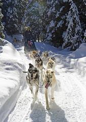 Couple enjoying dog sledding, British Columbia, Canada