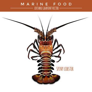 Spiny Lobster. Marine Food