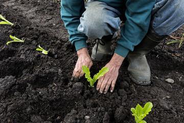 British Columbia, Canada, CEEDS Co-op, Horse Lake Community Farm Co-op, farmers, farming, agriculture, garden, gardening,