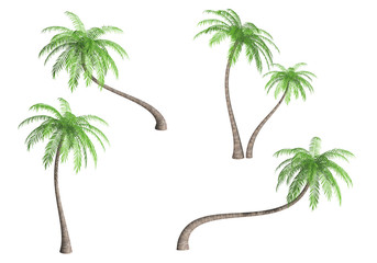 Set of coconut palm trees (Cocos nucifera) isolated on white background. 3D illustration.