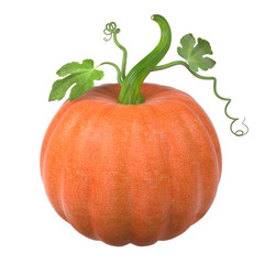 Big orange Thanksgiving pumpkin with long stem green leaves and curls, isolated on white background. 3D illustration.