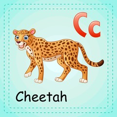 Animals alphabet: C is for Cheetah