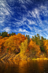 autumn forest by the river