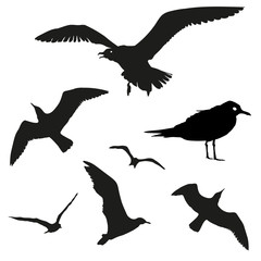 Vector set - seagull silhouette on white background