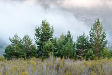 Paisaje con pinos y niebla. Sierra de la Cabrera, León.
