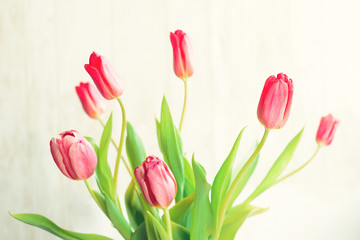 spring fresh tulips sunshine