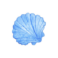 Seashell Blue  Nautical Watercolor Illustration Hand-painted Isolated Sea Element Navy Blue Ocean
