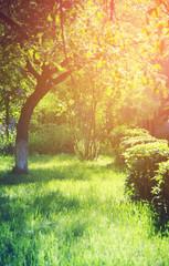 tree in garden. green garden concept
