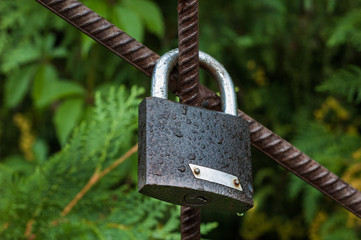 Lock hanging on the gate, covered with moisture, on a background of green leaves.
