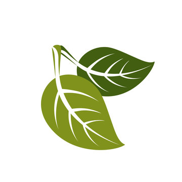 Two spring leaves simple vector icon, nature and gardening theme