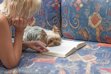 Blond woman is reading a book together with a Yorkshire terrier. The dog is lying on the couch in front of open book.