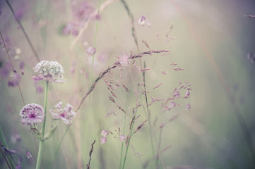 Amazing sunrise at summer meadow with wildflowers. Abstract floral background in vintage style,...