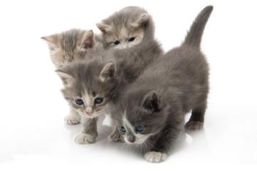 little fluffy kitten makes the first steps